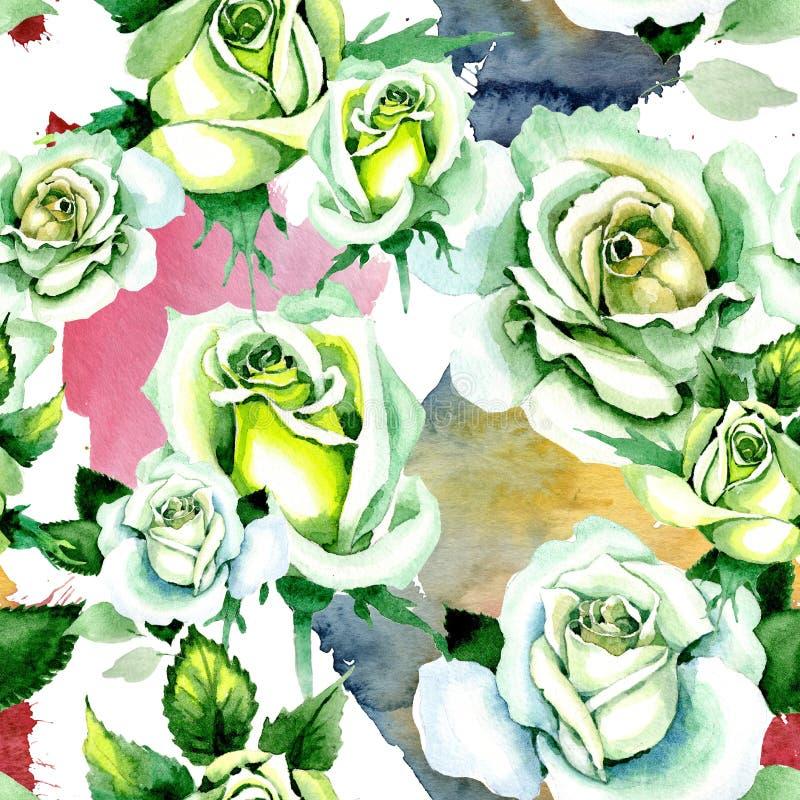 Whit roses. Floral botanical flower. Wild spring leaf wildflower pattern. Aquarelle wildflower for background, texture, wrapper pattern, frame or border stock illustration