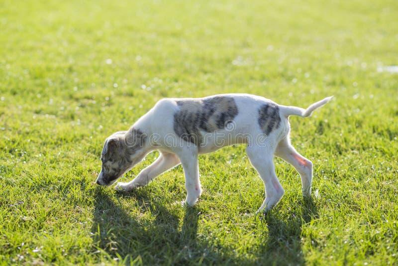 Whitby hund arkivfoto
