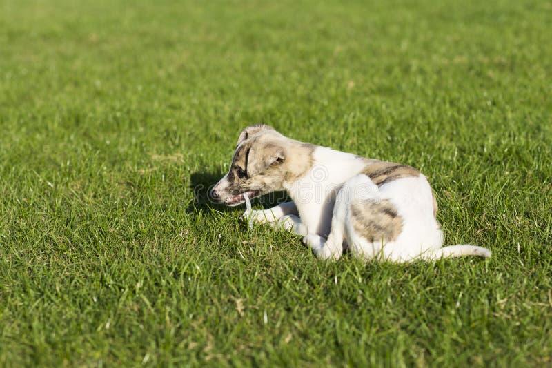 Whitby hund arkivbild