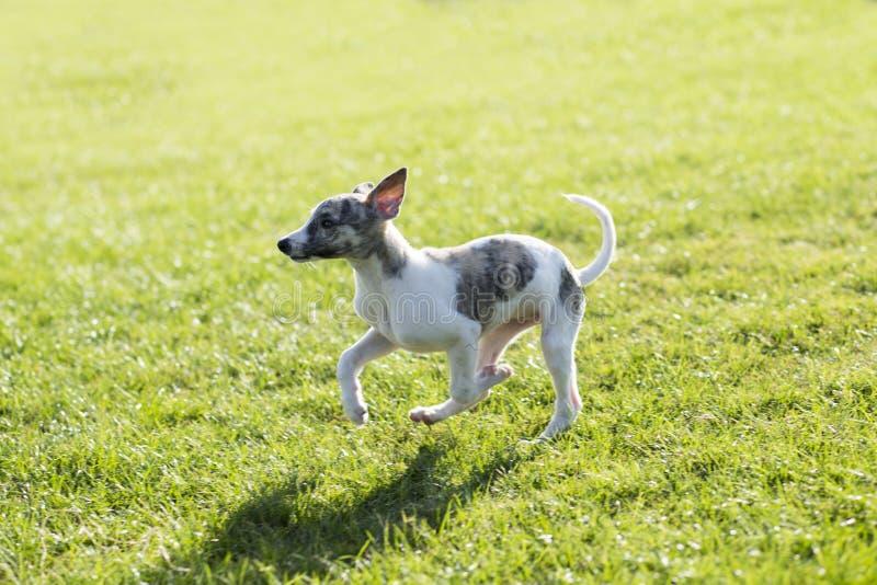 Whitby hund royaltyfri fotografi