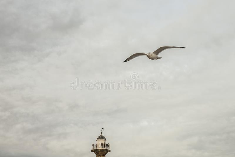 Whitby, Yorkshire, England - seagull in the air. stock photos