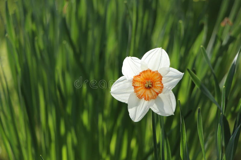 White 6 Petal Flower Near Grass During Daytime On Close Up Photo Free Public Domain Cc0 Image