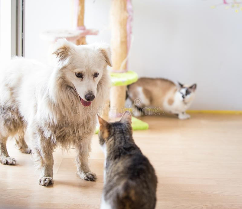 White adopted dog meeting cat. White adopted dog meeting cute cat stock images