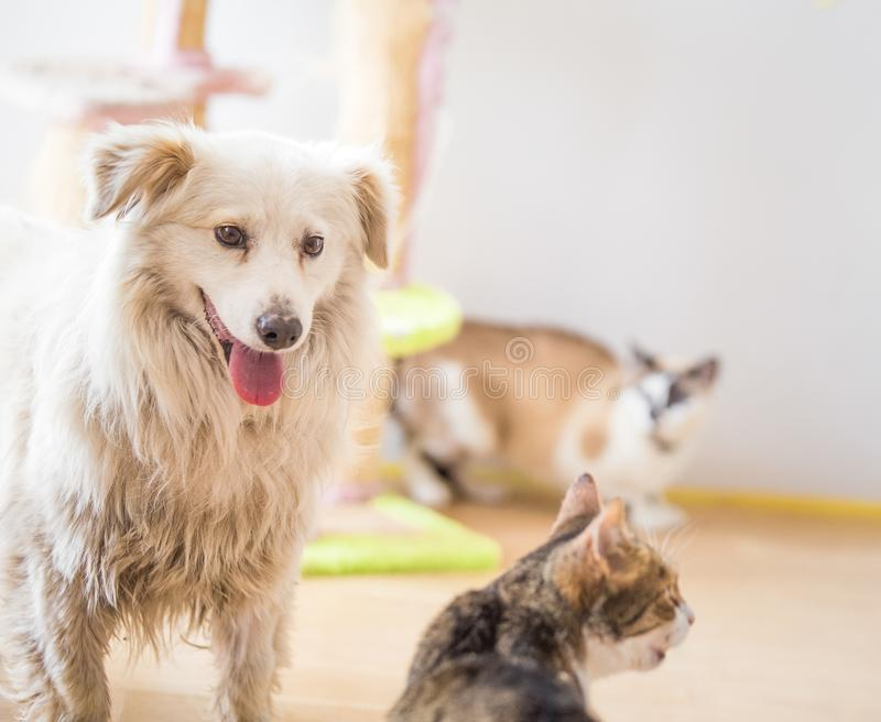 White adopted dog meeting cat. White adopted dog meeting cute cat stock photography