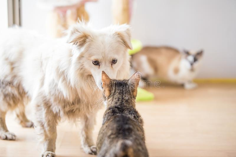 White adopted dog meeting cat. White adopted dog meeting cute cat royalty free stock photography