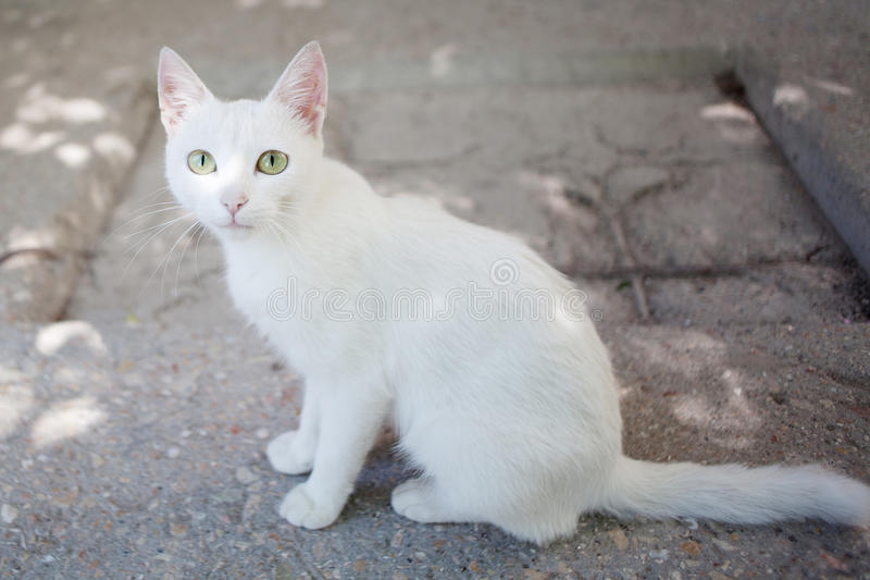 White alley cat sits on the ground. Nature stock images