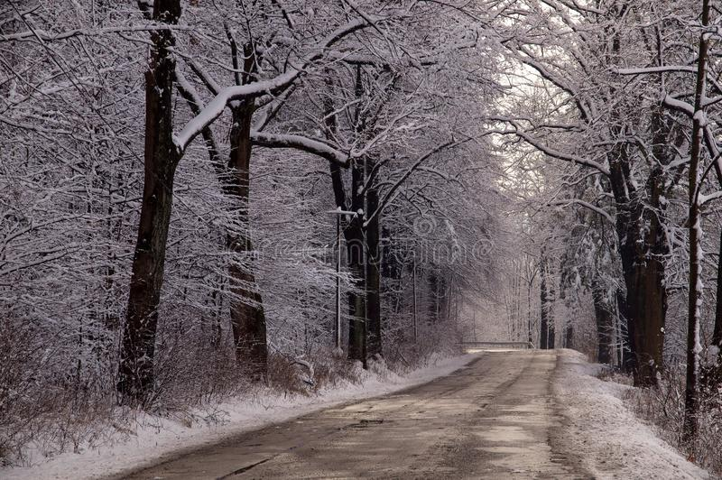 White Alley, winter in the countryside royalty free stock photography