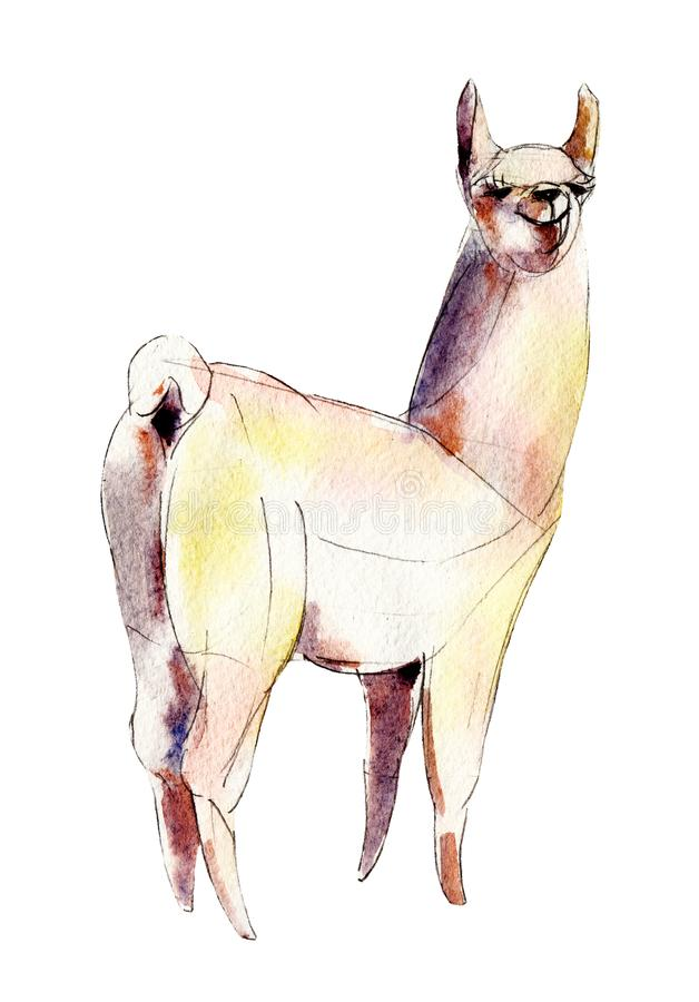 The white alpaca, watercolor illustration isolated on white. royalty free illustration