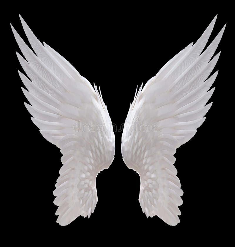 Free White Angel Wing Stock Photo - 80052050