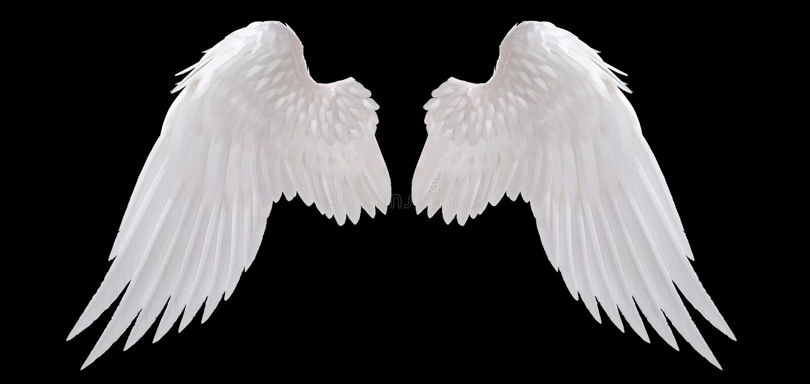 White angel wing. Isolated on black vector illustration