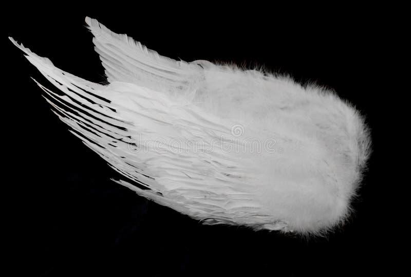 White Angel Wings on Black royalty free stock image