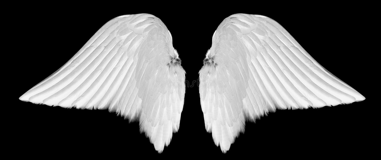 White angel wings royalty free stock photo