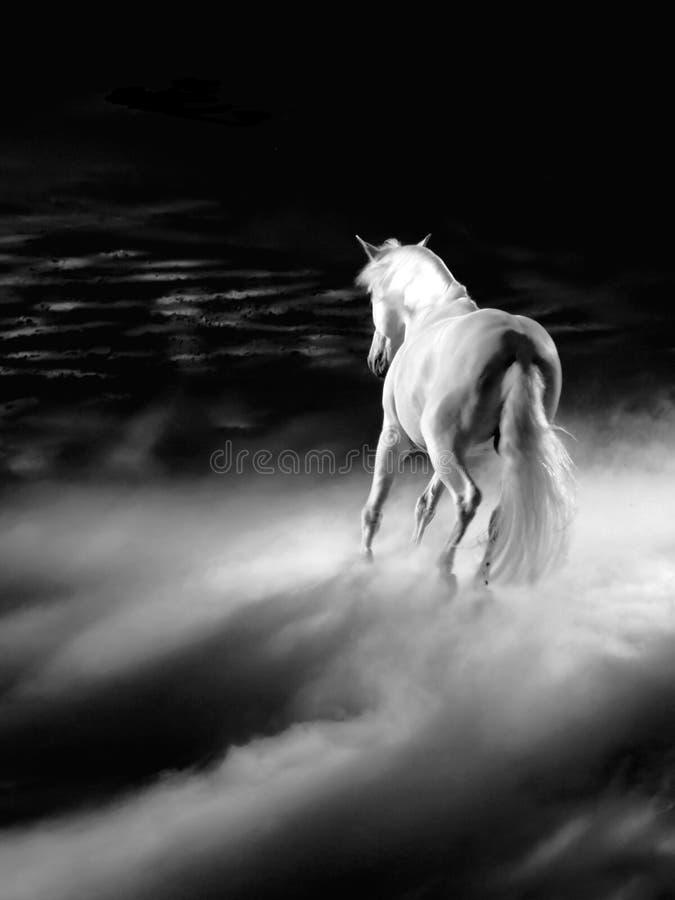 Download White arabian horse stock illustration. Image of animal - 14624606