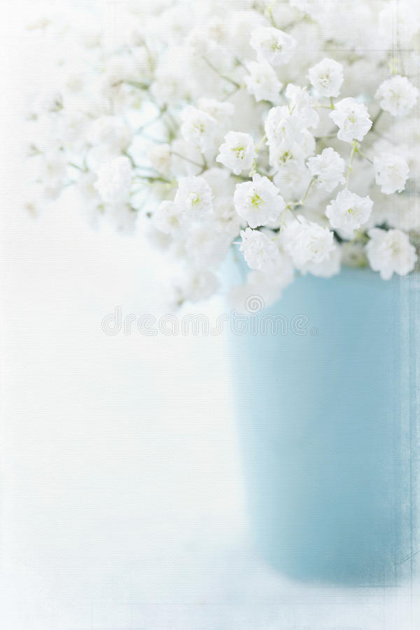 White baby's breath flowers stock images