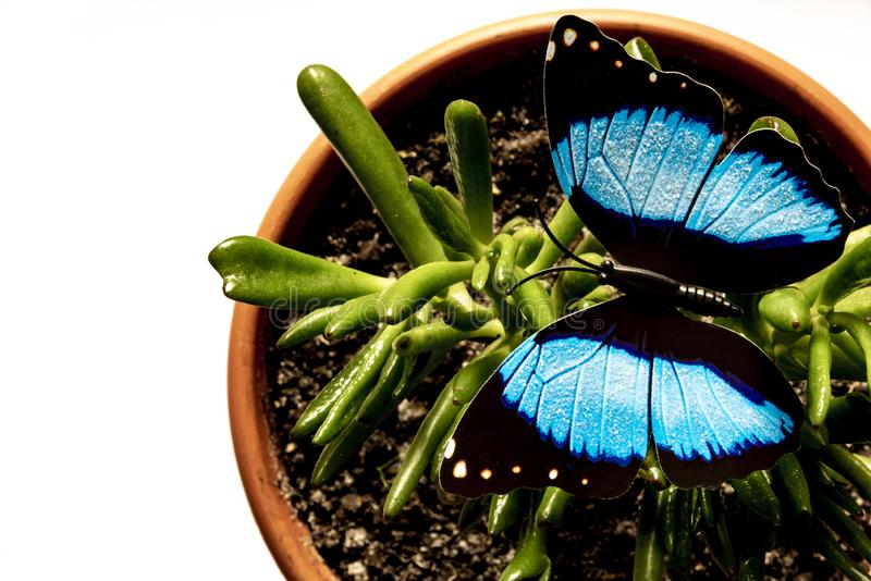 Living plant and artificial butterfly stock photos