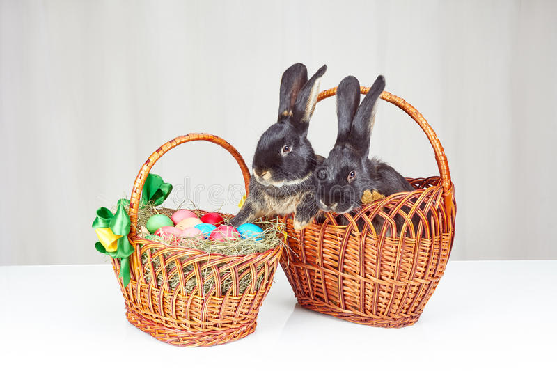 On a white background Easter basket and two easter bunny in a basket stock images