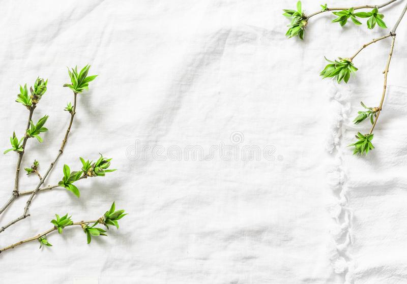 White background with fresh green leaves branches with copy space. Rustic spring frame background composition with free space for stock photos