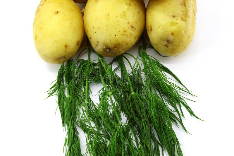Three potato, boiled with peel, green dill on a white background stock photo