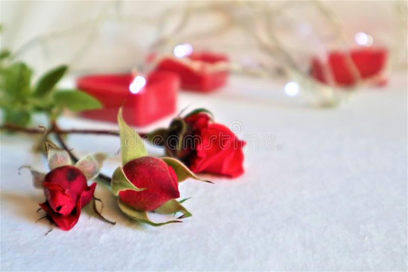 White background with red hearts, gifts. The concept of Valentine Day stock photo