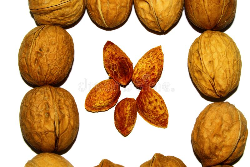 Square of walnuts on white background royalty free stock image