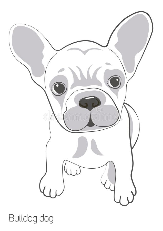On a white background there is a silhouette of a bulldog dog. There is a small and cute puppy bulldog. Vector image vector illustration