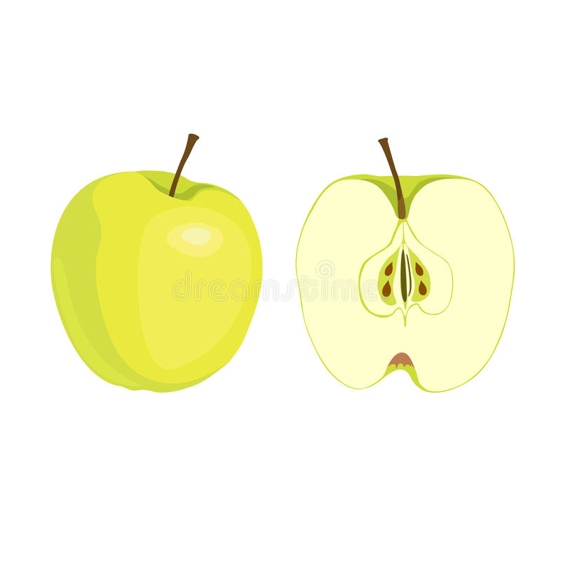 On a white background whole apple and half apple. Isolated on a white background whole ripe Apple and half apple. Fruit processing, juice, jam, dried fruits stock illustration