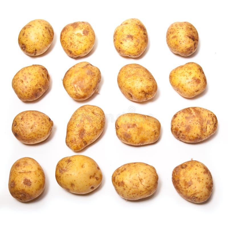White Baking Potatoes royalty free stock image