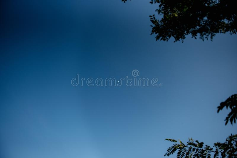 Blue skies with tree branches. Blue skies framed with tree branches with copy space royalty free stock photography