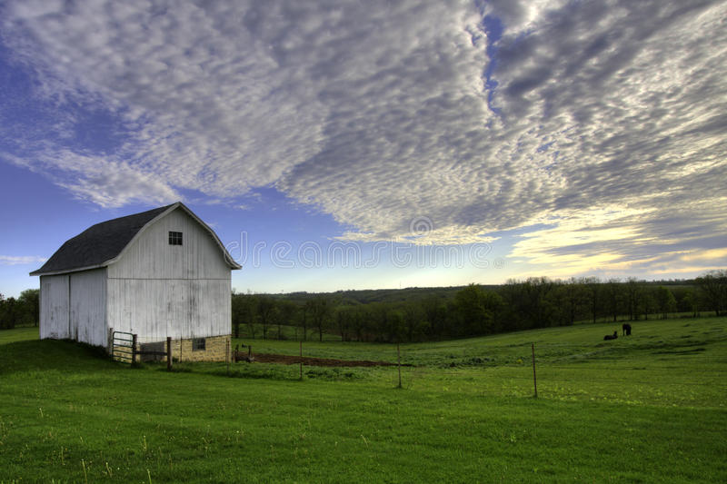White barn with horses stock photo