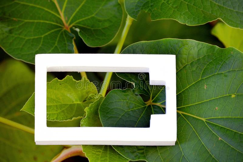 White battery icon on green leaves. Of tropical tree, White battery symbol placed on a green leaf. White object in nature vegetation. Save energy concept royalty free stock photo