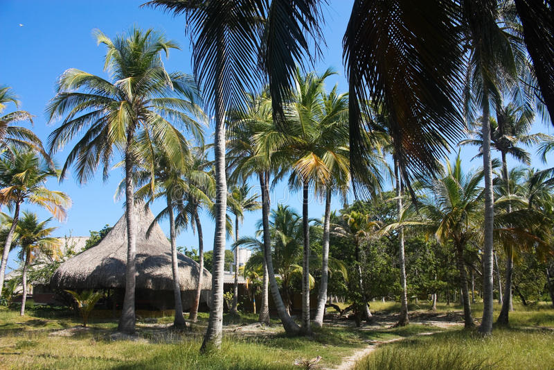 White beach on the island of Baru. Playa Blanca on the island of Baru. Cartagena de Indias. Colombia royalty free stock photography