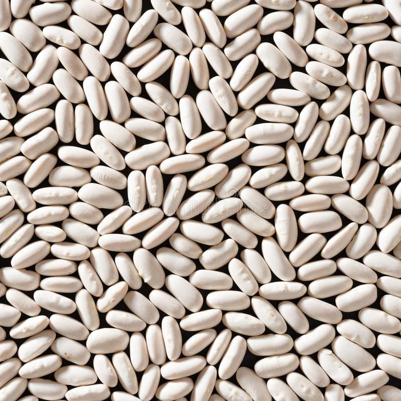Download White Beans stock photo. Image of nature, traditional - 26366218