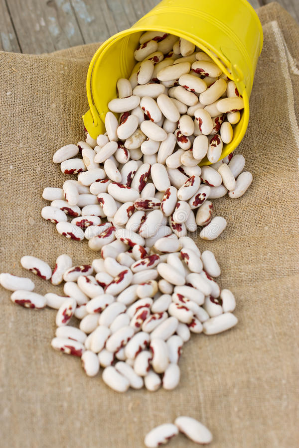 White Beans In A Bucket Royalty Free Stock Photography