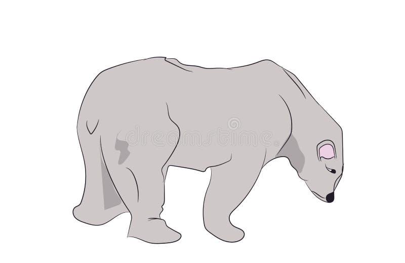 White bear stands, vector vector illustration