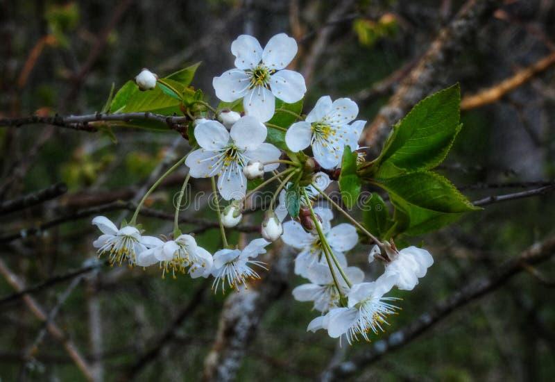White beauty in nature. Whiteflower, whiteflowers, beautiful, flowerphoto, flowerphotography, beautyinnature, spring, summer, blossom, bloom, tree, trees royalty free stock image