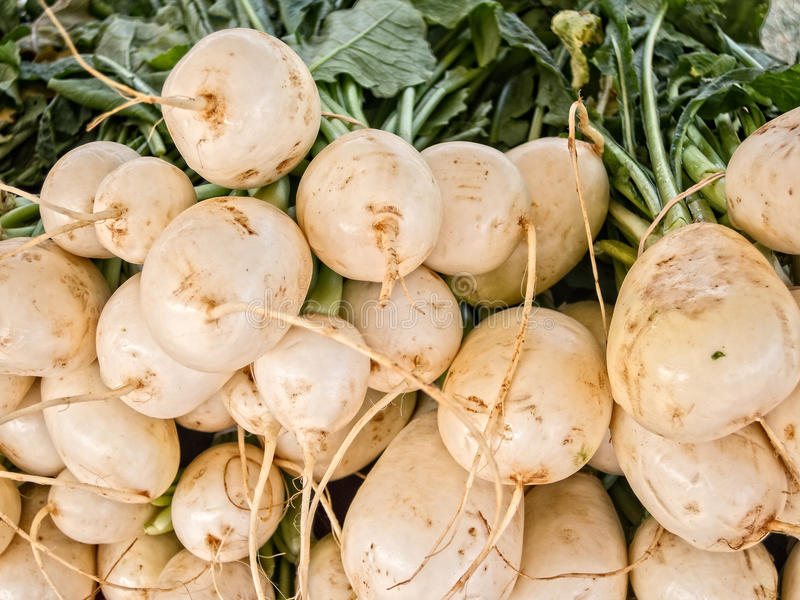 White Beets royalty free stock photo