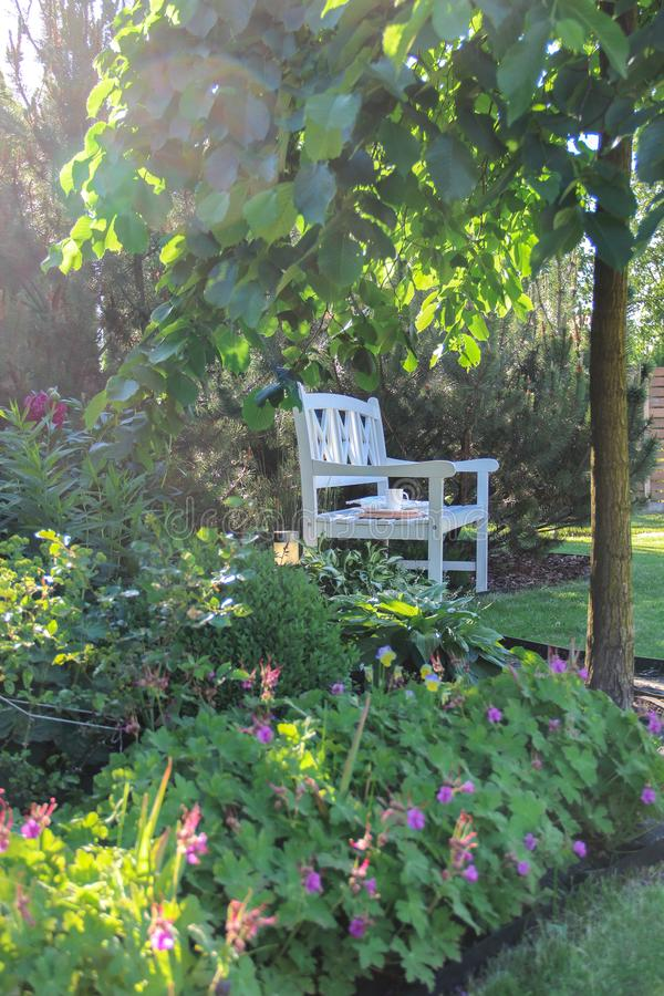 White bench in a green summer garden in the evening light. White bench under a green tree in a summer garden in the evening light royalty free stock photos