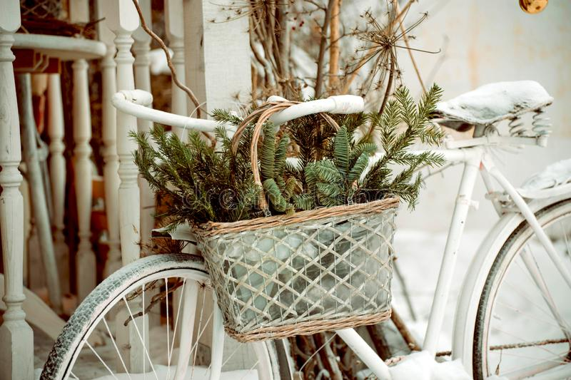 White bicycle with a basket with fir branches outside royalty free stock photo