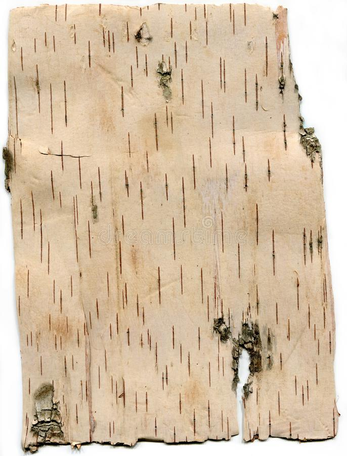 White birch bark backdrop frame texture pattern close-up stock photo
