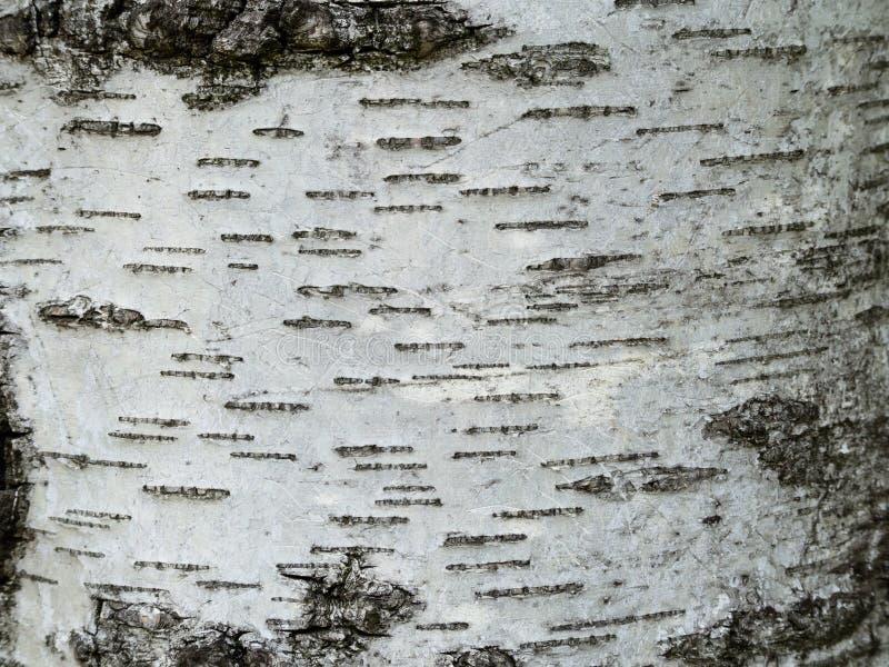 Birch bark texture - closeup shot royalty free stock images