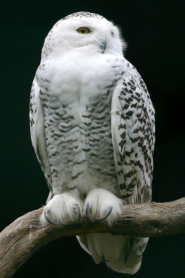 Free White Bird Stock Photo - 1482310