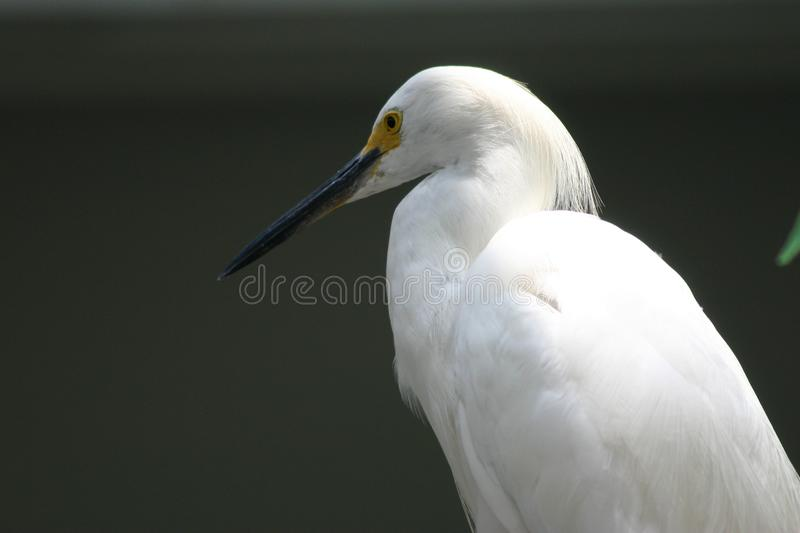 White Bird Free Stock Photo