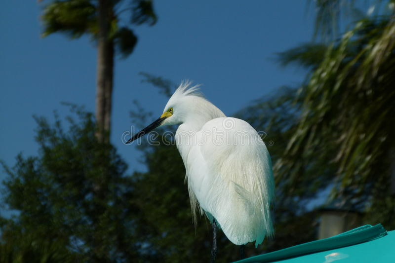 The white bird from the caribic royalty free stock photos