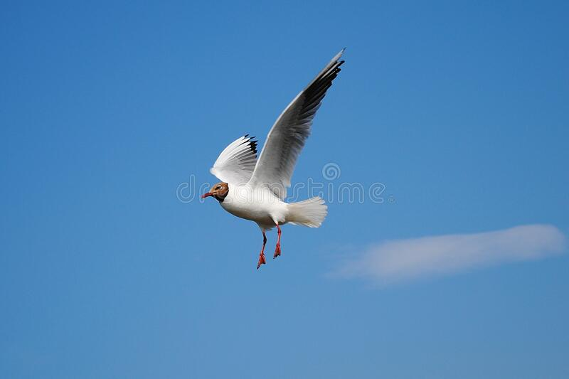 White Bird Flying Above Blue Skies during Daytime stock photos