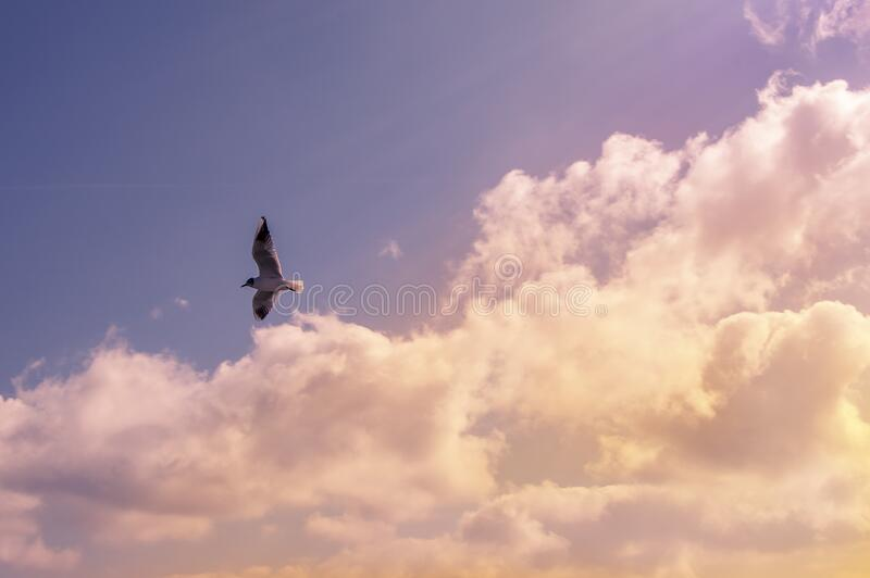 White Bird Flying Under Cloudy Sky During Daytime Free Public Domain Cc0 Image