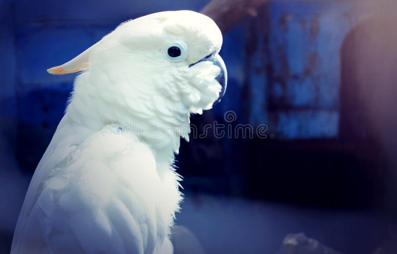 White Bird indonesia royalty free stock photography