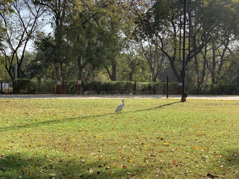 White bird stock image