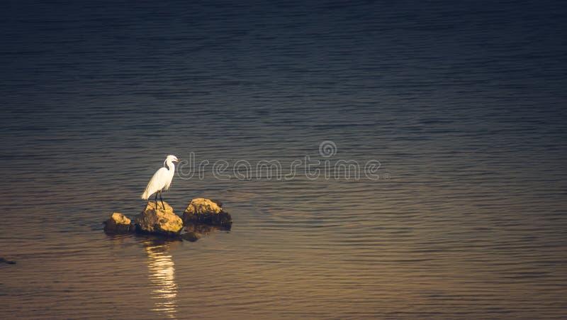White bird seagull sea bird on the rock on the sea. Vintage tone nature background stock images