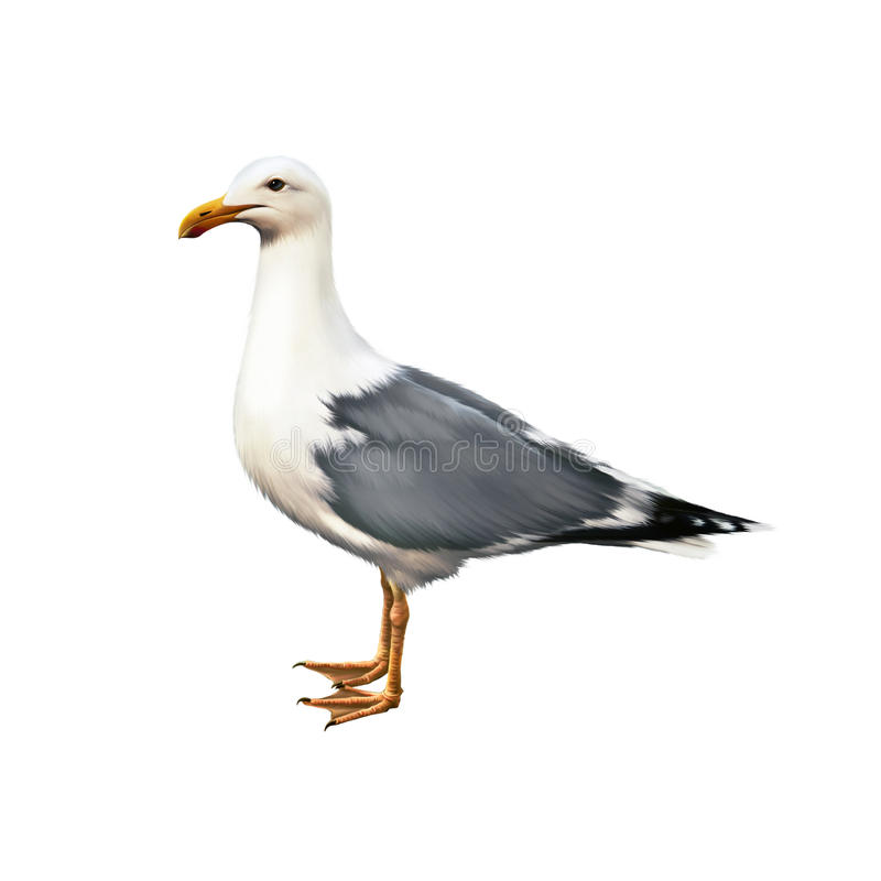 White bird seagull standing. Illustration isolated on white stock photography