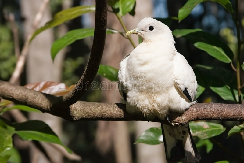 White bird sunning royalty free stock photo